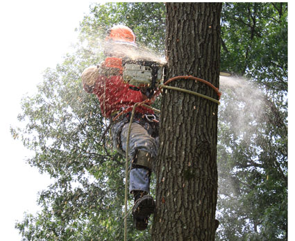 TREE SERVICES IN RI